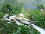Конный поход Осенняя рыбалка на Аргуте