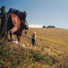 На лошадях к Белухе